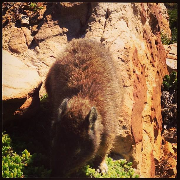 Coool animal at Capepoint