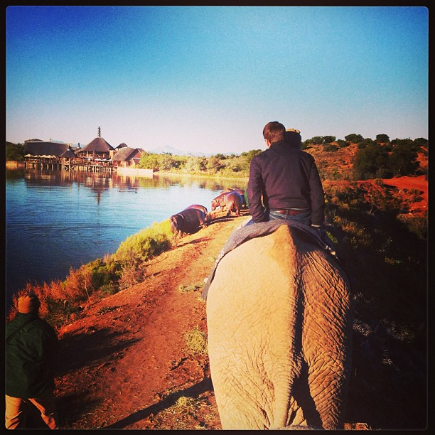 Riding an Elephant and crossing hippos